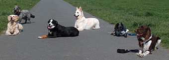 Die_Hunde